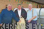SHEARING: Finn Deane (Castlemaine), Paddy Deane (Tralee) and Peter Daly (Camp) Getting the sheep ready for shearing demontration at the Camp Fair on Friday. .