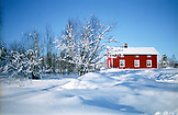 SWEDEN,, Swedish Lapland, Wonder Scenic Red House and Tree