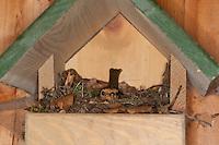 Rotkehlchen, Nest in einem Nistkasten, Halbhöhle, brütender Altvogel, Erithacus rubecula, robin