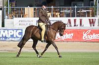 Hunter Pony over 12.2 NE 13hh