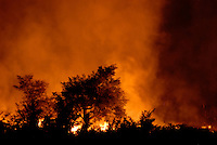 MALI, slash and burn, bush fire to clean up area for agriculture / Mali , brennender Busch , Brandrodung