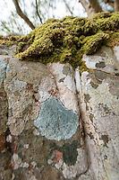 Carnach Woodland Wanderweg (Carnach Woodland Trail) nahe der Ortschaften Milltown und Applecross.<br /> Der Wanderweg fuehrt durch ein Gebiet der vor ca. 4.000 Jahren als mystischer Ort galt und von zahlreichen unterirdischen Energielinien durchzogen ist.<br /> Im Bild: Gemusterte Felsen.<br /> 23.5.2015, Highlands/Schottland<br /> Copyright: Christian-Ditsch.de<br /> [Inhaltsveraendernde Manipulation des Fotos nur nach ausdruecklicher Genehmigung des Fotografen. Vereinbarungen ueber Abtretung von Persoenlichkeitsrechten/Model Release der abgebildeten Person/Personen liegen nicht vor. NO MODEL RELEASE! Nur fuer Redaktionelle Zwecke. Don't publish without copyright Christian-Ditsch.de, Veroeffentlichung nur mit Fotografennennung, sowie gegen Honorar, MwSt. und Beleg. Konto: I N G - D i B a, IBAN DE58500105175400192269, BIC INGDDEFFXXX, Kontakt: post@christian-ditsch.de<br /> Bei der Bearbeitung der Dateiinformationen darf die Urheberkennzeichnung in den EXIF- und  IPTC-Daten nicht entfernt werden, diese sind in digitalen Medien nach &sect;95c UrhG rechtlich geschuetzt. Der Urhebervermerk wird gemaess &sect;13 UrhG verlangt.]
