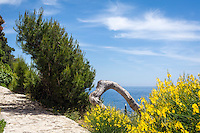 France, Provence-Alpes-Côte d'Azur, peninsula Cap Ferrat between Villefranche-sur-Mer and Beaulieu-sur-Mer, Saint-Jean-Cap-Ferrat: seaside walk along Promenade des Fossettes | Frankreich, Provence-Alpes-Côte d'Azur, Halbinsel Cap Ferrat zwischen Villefranche-sur-Mer und Beaulieu-sur-Mer, Saint-Jean-Cap-Ferrat: auf der Promenade des Fossettes immer am Meer entlang