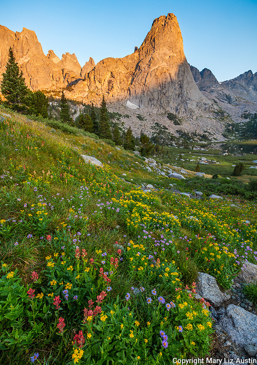 Wind River Range, WY: Morning light on Pylon Peak from a field of alpine wildflowers; Cirque of the Towers; Popo Agie Wilderness; Shoshone National Forest