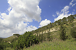 Israel, Tzora forest in the Shephelah