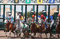 The start of the Rampart Stakes. Awesome Maria (5) gets a rough start but recovers to win the Rampart Stakes (G3). Gulfstream Park Hallandale Beach Florida. 03-31-2012 Arron Haggart / Eclipse Sportswire