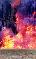 THE TREES ARE BURNING<br /> GLOBAL WARMING, ENVIRONMENT