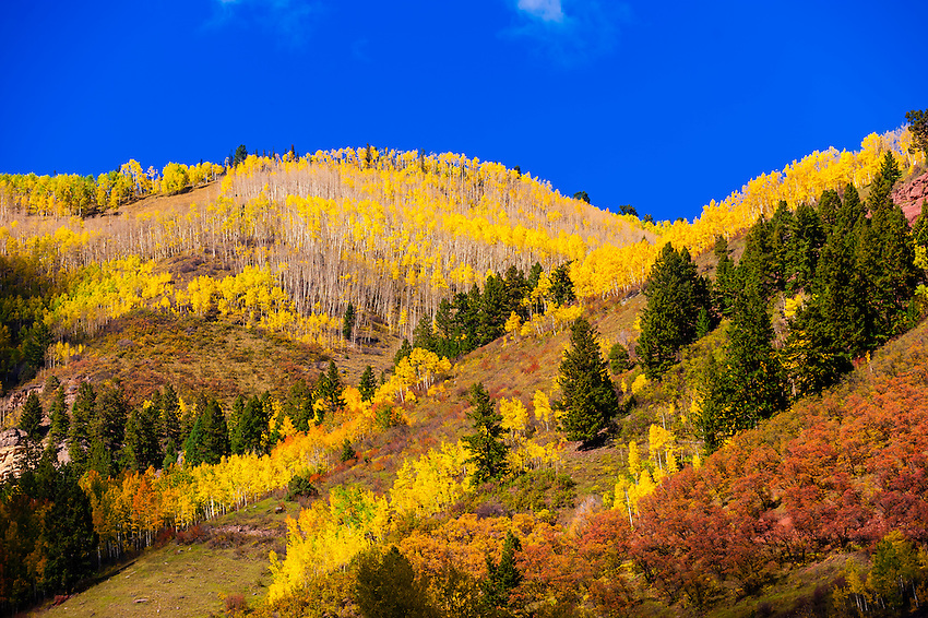 Fall color, Telluride, Colorado USA.