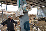 Natanel at his sheep pen, in the unauthorized Israeli settler-outpost of Chavat Gilad, West Bank.