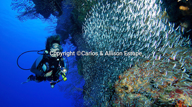 Diver and Shoal of Silversides, Grand Cayman