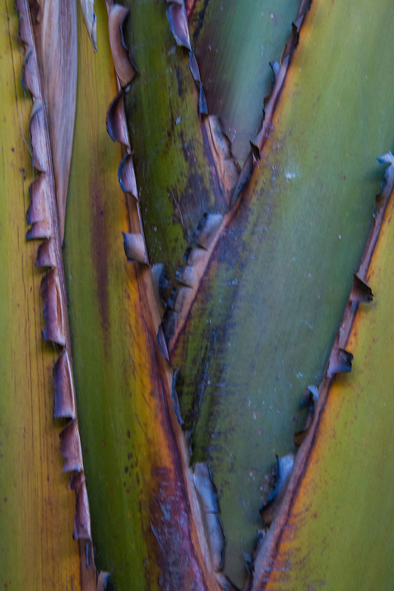 Palm Detail, Sydney, New South Wales, Australia