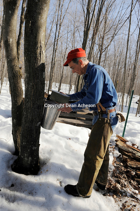 David Lintereur of Lake Tomahawk, WI on April 5, 2008 checks a bucket hung on a maple tree on his property. Cold nights and warm days are conducive to a good flow of sap during the spring harvest. He produces about 75 gallons of maple syrup each season, he said.