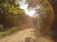 FOREST_LOCATION_90013