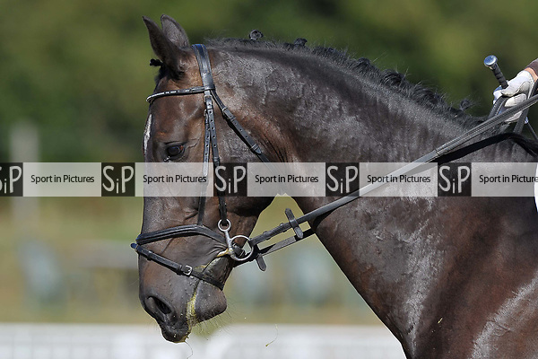 Class 1. British dressage. Brook Farm Training Centre. Essex. UK. 28/07/2018. ~ MANDATORY Credit Garry Bowden/Sportinpictures - NO UNAUTHORISED USE - 07837 394578