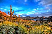 Wildflower Goodness - Arizona