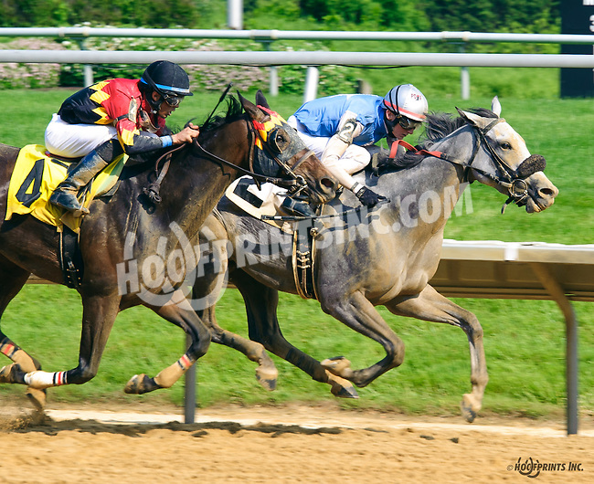 Dun Won winning at Delaware Park on 6/1/16