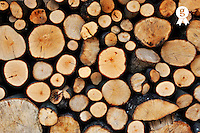 Stack of tree logs (Licence this image exclusively with Getty: http://www.gettyimages.com/detail/101682979 )