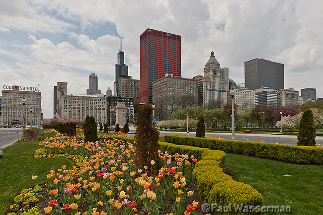 Tulips along Chicago's Congress Parkway