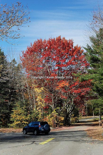 Fall at Camden Hills State Park, Maine, USA