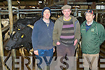 Maurice Costello Cordal, Thady Donoghue Abbeyfeale and Jim Cremins Castleisland looking for at the cattle at the Castleisland Mart sale last Friday ....