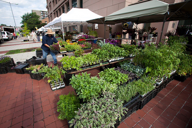 June 1, 2012.©2012 David Burnett/: New York.Washington DC: .shot at Farmers Market,  14th & U st NW,
