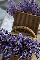 A picnic basket full of fresh lavender