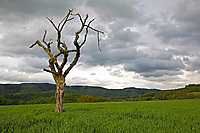 Nature Art: Tree bodypainting with model Lea and a cripple tree at Ruehler Schweiz in Ruehle - Calendar sheet of the 'Nature Art Bodypainting in Landscpapes' calendar 2018 by the bodypaint artist Joerg Duesterwald and the photographer Tschiponnique Skupin