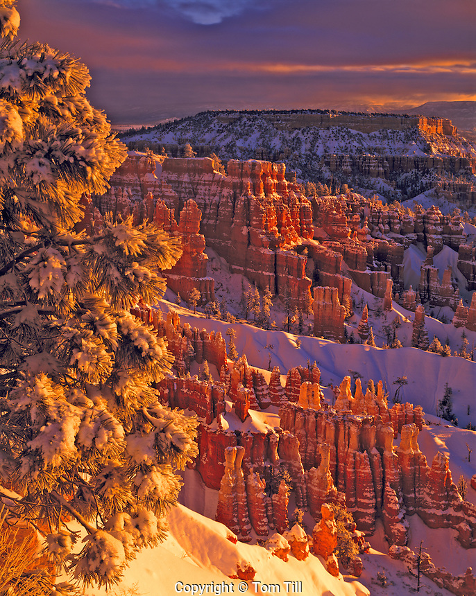 Winter Sunrise at Bryce, Sunset Point, Bryce Canyon National Park, Utah