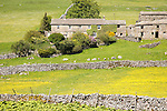 Attractive farm buildings at Deepdale, in Langstrothdale, Yorkshire Dales national park, England, UK