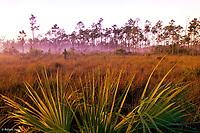 Misty sunrise<br /> Everglades National Park, Florida