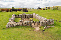 Northumberland, England, UK.  Brocolitia Mithraic Temple (Carrawburgh Temple of Mithras).  Hadrian's Wall Footpath.