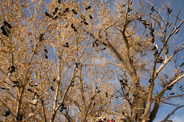 Shoe tree along Highway 50.