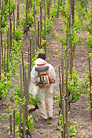 manually spraying the vineyard cornas rhone france