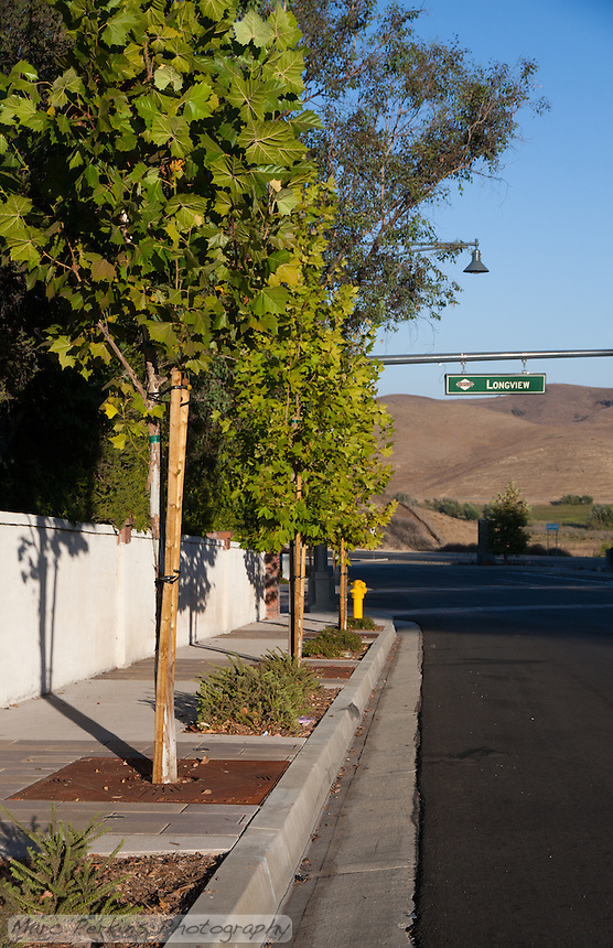 """Shows the parkway, tree grates, and trees northwest of the intersection. This was part of the 2015 rebuild of the Grand Avenue and Longview Drive intersection for Diamond Bar's 2015 """"Grand Avenue Beautification"""" project, landscape architecture for the project was by David Volz Design."""
