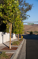 "Shows the parkway, tree grates, and trees northwest of the intersection. This was part of the 2015 rebuild of the Grand Avenue and Longview Drive intersection for Diamond Bar's 2015 ""Grand Avenue Beautification"" project, landscape architecture for the project was by David Volz Design."