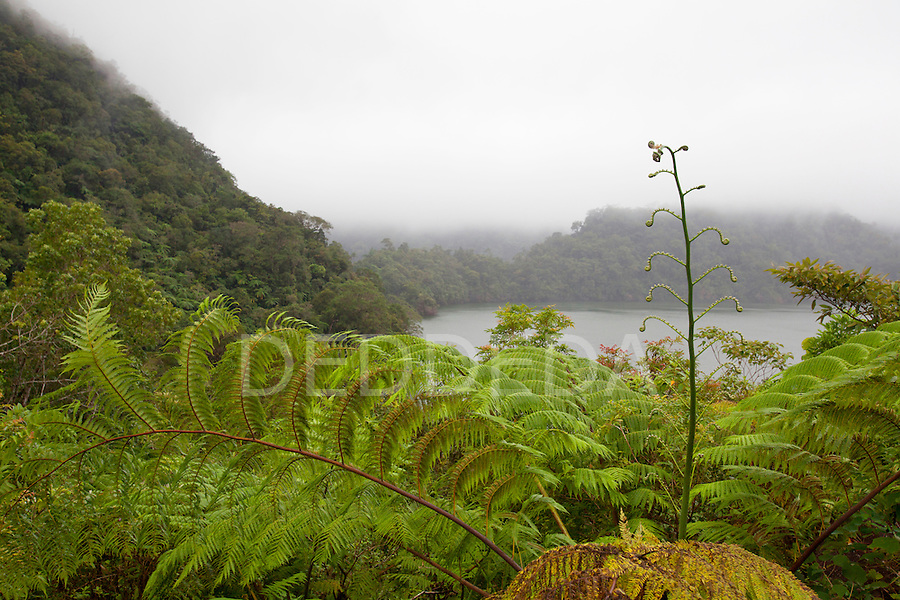 Ferns and lush plants srround the water at Twin Lakes National Park Negros Island, Philippines.