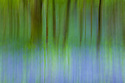 Long exposure motion blur abstract of a bluebell wood, Isle of Mull, Scotland, UK. June.