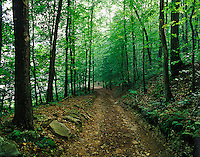 Historic Wilderness Road used by early pioneers after passing through Cumberland Gap, Middlesboro, KY