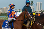 HALLANDALE BEACH, FL  JANUARY 27: #3 Stellar Wind ridden by Joel Rosario in the post parade before the Pegasus World Cup Invitational, at Gulfstream Park Race Track on January 27, 2018,  in Hallandale Beach, Florida. (Photo by Casey Phillips/ Eclipse Sportswire/ Getty Images)