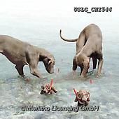 CHIARA,REALISTIC ANIMALS, REALISTISCHE TIERE, ANIMALES REALISTICOS, paintings+++++,USLGCHI544,#A#, EVERYDAY ,photos
