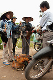 VIETNAM, Hue, women negotiate the sale of some chickens on the side of the road in rural Hue