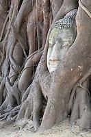 Thailand, Phra Nakhon Si Ayutthaya: The head of the Sandstone Buddha image, under a Bodhi tree, in Wat Mahatat | Thailand, Phra Nakhon Si Ayutthaya: Buddha Kopf aus Sandstein zwischen den Wurzeln eines Bodhi-Baums im Tempel Wat Mahatat