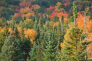 Autumn foliage along Route 302 in  Carroll, New Hampshire USA