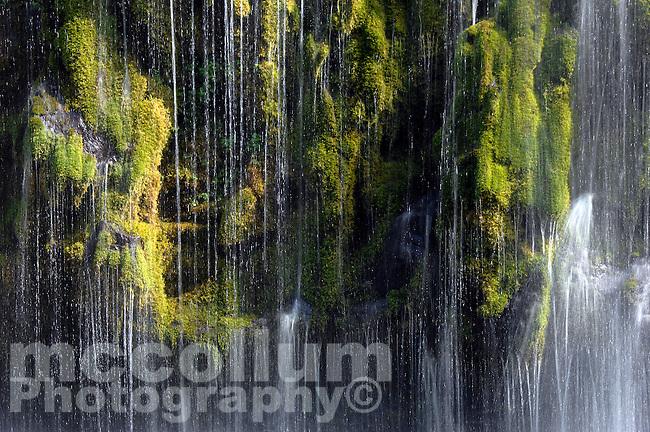 Water flows down green moss at Mossbrae Falls, along the Sacramento River, near Dunsmuir, Siskiyou County, California  .