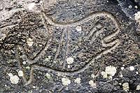 Makah Indian petroglyphs, Orcinus orca, Orcas Sand point beach, Olympic National Park, Olympic Peninsula, Washington, USA