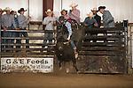 SEBRA - Chatham, VA - 3.12.2016 - Bulls