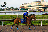 HALLANDALE BEACH, FL - JANUARY 25: West Coast and Dana Barnes gallop in preparation for the Pegasus World Cup Invitational at Gulfstream Park Race Track on January 25, 2018 in Hallandale Beach, Florida. (Photo by Alex Evers/Eclipse Sportswire/Breeders Cup)