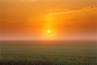 SUnrise and wheat field in fog<br /> near Brandon<br /> Manitoba<br /> Canada