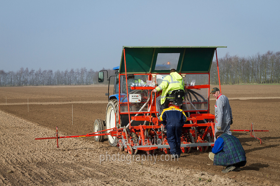 Drilling sugar beet variety trials - March; South Lincolnshire