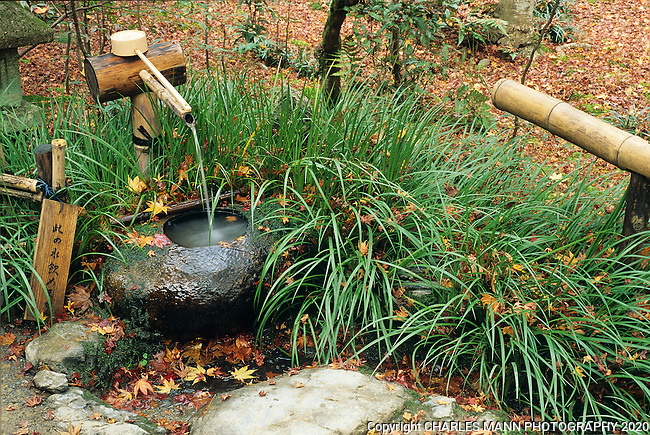 A Japanese fountain with a bamboo spout and stone basin seems to evoke a sense of tranquility sitting in the midst of falling autumn leaves.